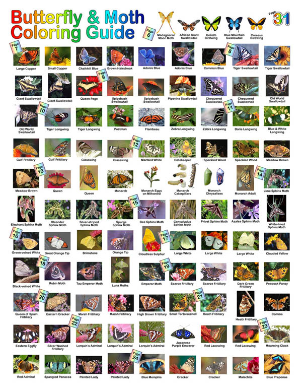 live monarch butterfly life cycle poster butterfly kit