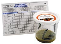 butterfly monarch rearing kit life cycle poster grow raise butterflies