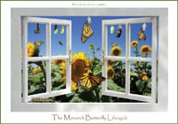Live Monarch Butterfly Rearing Kit butterfly kit live butterfly kit monarch butterfly chrysalis educational school kit classroom party favor releasing butterfly butterfly wedding decoration butterfly themed wedding live butterfly release butterfly wedding accessory butterfly releasing wedding live wedding butterfly wedding monarch butterfly life cycle poster swallowtailfarms.com