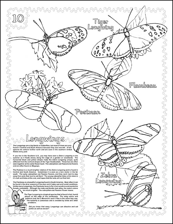 Live Monarch Butterfly Life Cycle