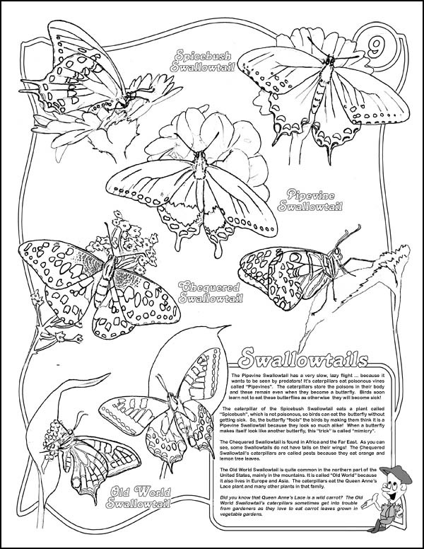 Free Life Cycle Of A Monarch Butterfly Coloring Pages